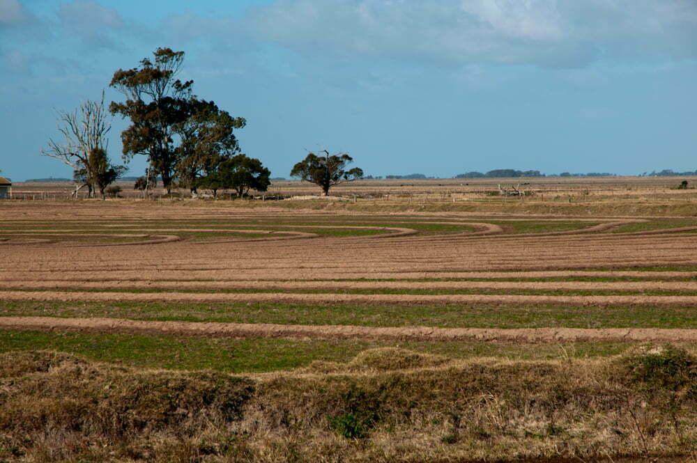 Estação Ecológica do TAIM, imagem de campo plantado com arroz Estação Ecológica do TAIM