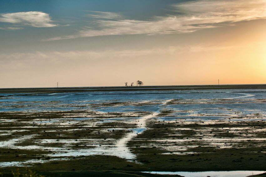 Paisagem, área alagada Estação Ecológica do TAIM