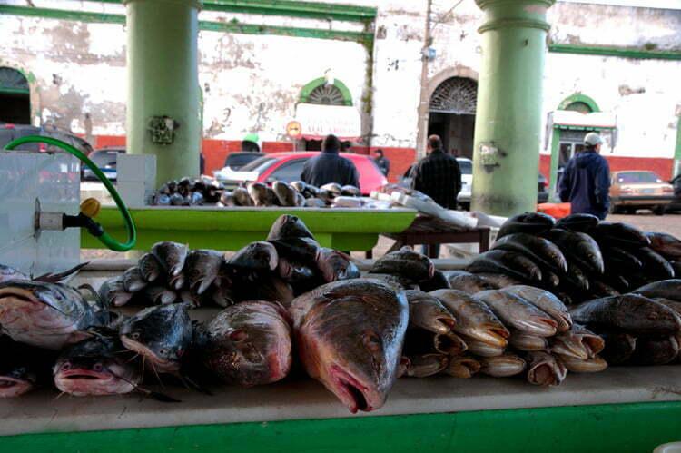 imagem de barraca de peixes no marcado de Rio Grande, RS.