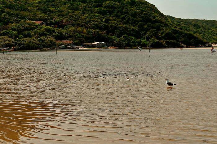 praia Guarda do Embaú com aves Talha Mares e Gaivotão, Apa da Baleia Franca